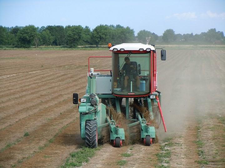 Vlas keren Zeeuws-Vlaanderen Agrifoto